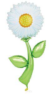 5' Fresh Picks White Daisy